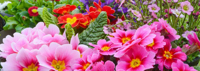 flowers_crop_sm