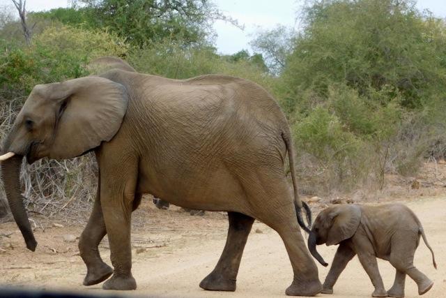 safari-talk-elephants