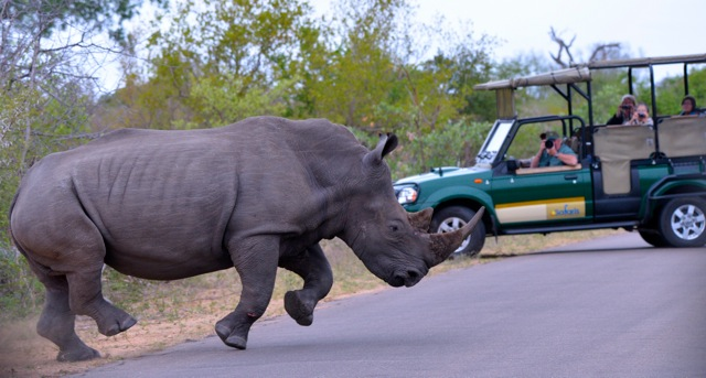 safari-talk-rhino