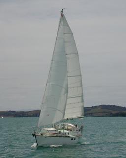 velella_NZ